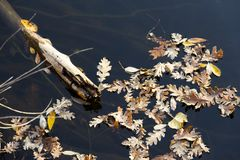 Lake with a stick and some tree leaves in autumn royalty free stock images