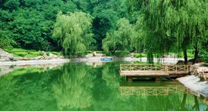 Lake in summer Royalty Free Stock Photo