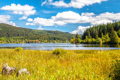 Lake in the summer. Black forest royalty free stock photography
