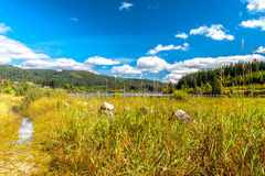 Lake in the summer. Black forest stock images