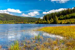 Lake in the summer. Black forest stock photo