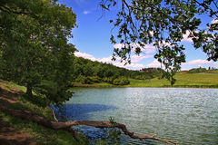 Lake on a summer day Stock Photos