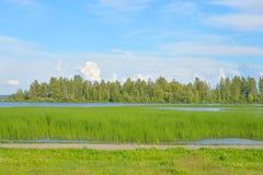 Lake at summer day. Royalty Free Stock Image