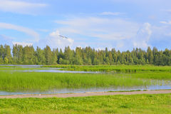 Lake at summer day. Stock Photos