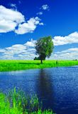 Lake on the summer field Royalty Free Stock Photo