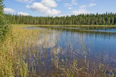 Lake in summer, Finland Royalty Free Stock Photos