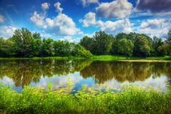 Lake in a summer forest. Sunny day, blue sky Stock Photo