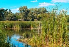 On the lake Royalty Free Stock Image