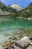 Lake in the summer Pyrenees. Neouvielle nature reserve has many lakes and rich flora and fauna. The mountains are covered with dwarf mountain pines Royalty Free Stock Images