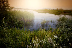 Lake in summer with vegetation Royalty Free Stock Image