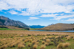 Lake Sumner, Canterbury, New Zealand Royalty Free Stock Image