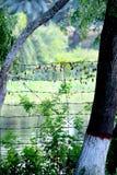 Lake in Sundarban Mangrove forest Royalty Free Stock Photos