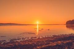 Lake sunrise with ducks Royalty Free Stock Photos