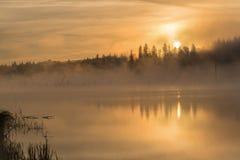 Lake sunrise fog golden Royalty Free Stock Image