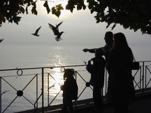 Lake Sunset. Family of four watching and feeding gulls on a late October afternoon at Lake Constance in southern Germany Royalty Free Stock Photos