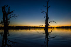 Lake sunset. Sunset over river with reflections of dead trees Stock Photography