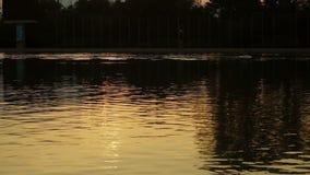 Lake Sunset Rowing stock video footage