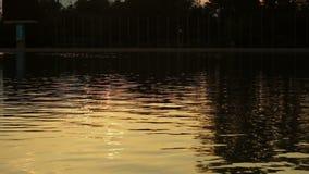 Lake sunset Rowing stock footage
