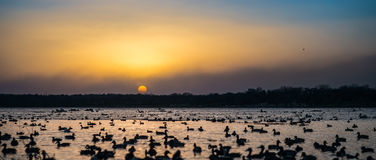 Lake Sunset Royalty Free Stock Image