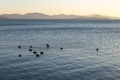 A lake at sunset, with some ducks on the blue water and distant. Hills and warm tones at the distance Stock Photography
