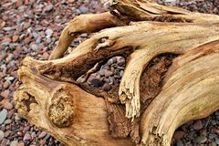 Lake Superior Driftwood Royalty Free Stock Image