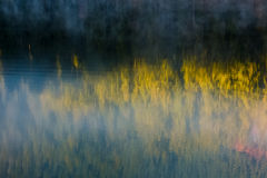 Lake surface reflecting spruce forest Stock Photography