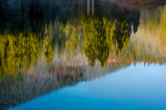 Lake surface reflecting spruce forest on hillside Stock Images
