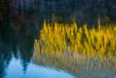 Lake surface reflecting spruce forest at sunrise Royalty Free Stock Photo