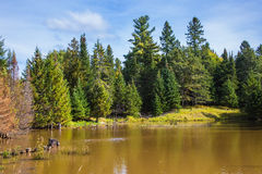The lake surrounded by evergreen firs Stock Photo