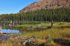 The lake, surrounded by forest and dry stumps Stock Image
