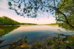 Lake surrounded by forest. frame bordered by pine branch. Stock Images