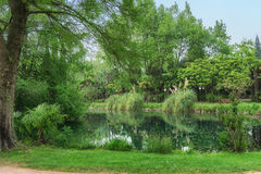 Lake surrounded by green forest trees Stock Images