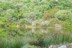 Lake surrounded by indigenous plants near Stellenbosch Royalty Free Stock Image