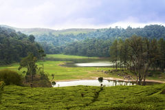 Lake surrounded by tea plantation in Bandung Royalty Free Stock Images