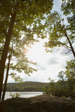 Lake surrounded by trees Royalty Free Stock Image