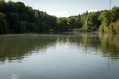 Lake surrounded with trees Stock Image