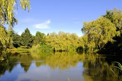 Lake surrounded by trees Royalty Free Stock Photography