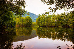 Lake Surrounded By Woodland Stock Photography