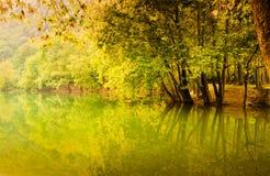 Lake Surrounded By Woodland stock photos