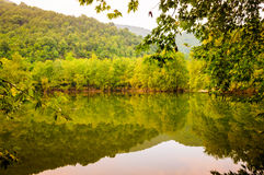 Lake Surrounded By Woodland Royalty Free Stock Photography