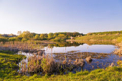 Lake swamp. Stock Image