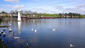 Lake with swans Stock Photos