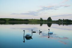 Lake with swans reeds forest and bridge at calm eavening summer day. Easy lazy vacation eavening with brigkt sy and lake water stock photo
