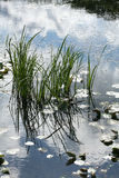lake tła Obrazy Royalty Free