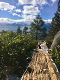Lake Tahoe royaltyfri foto