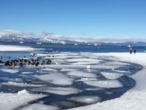 Lake Tahoe det en vinterafton royaltyfri fotografi