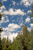 Lake Tahoe forest scenic Royalty Free Stock Images