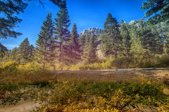 Lake Tahoe Forrest. Winter California royalty free stock images