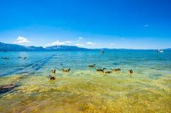 Lake Tahoe kust arkivfoton