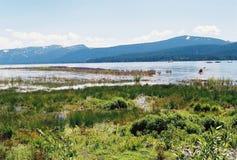 Lake Tahoe Nevada mit Bergen im Hintergrund Stockfotografie